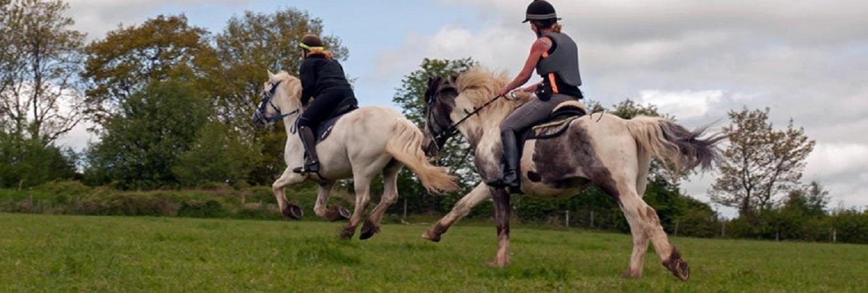 Equine-Hoof-Care